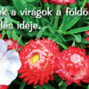 Fű, fa, virág - igés kártyák