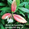 Növények - igés kártyák