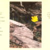 Kép-letek IV. Humusz