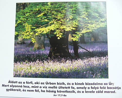 Plakát, Jer 17,7-8a