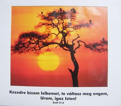 Plakát, Zsolt 31,6