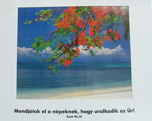 Plakát, Zsolt 96,10