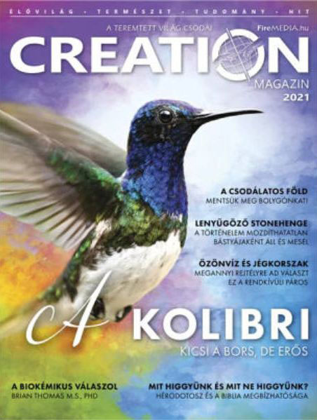 Creation - magazin / 2021
